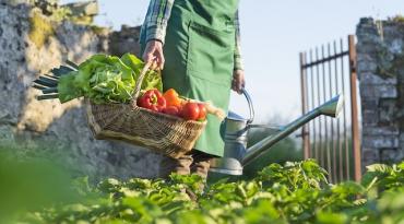 créer un carré potager dans son jardin